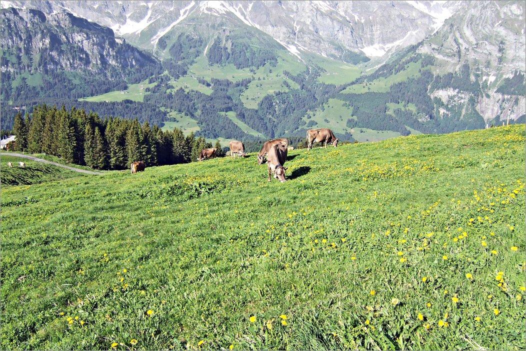 Klettersteig Brunni : Klettersteig brunni rigidalstock